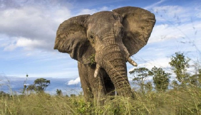 Wildlife protection in Kenya says it will pursue culprits who killed an elephant in a viral vidoe