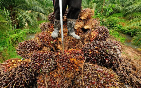OPDAG has appealed to government to exempt the oil palm sector from the Benchmark Valuation Policy