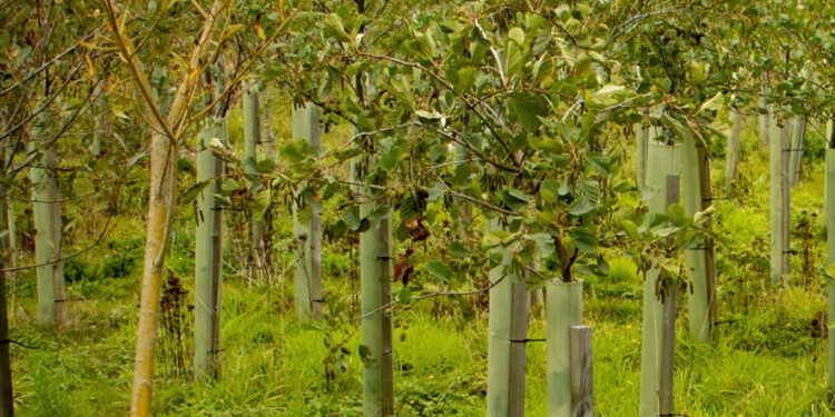 The project forms part of the 5 million trees nationwide campaign